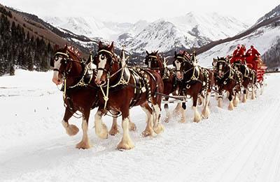 horses and christmas dr allan hamilton